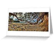 Waimama Bay Twisted Pohutukawas Greeting Card