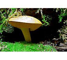 Mushroom up Close  Photographic Print