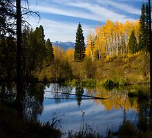 Beaver Pond Reflections by CrowningGlory