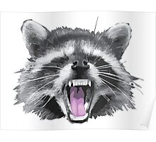 Another raccoon Poster