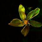 Yellow Radiation Of The Antares by Atılım GÜLŞEN