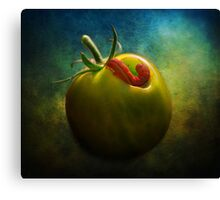 Tomato Raider Canvas Print