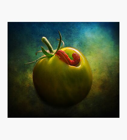 Tomato Raider Photographic Print