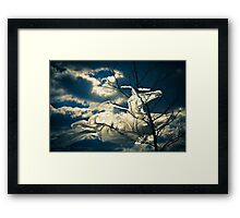 Eco Friendly  /  8 Framed Print