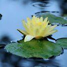 lotus Flower by mariamejia2