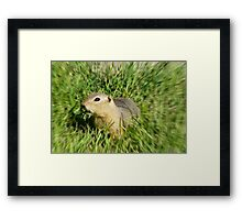 Prairie Dog,In A Blur Of Green,,Dizzy  With Delight Framed Print