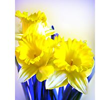 Daffodils blue yellow watercolor  Photographic Print