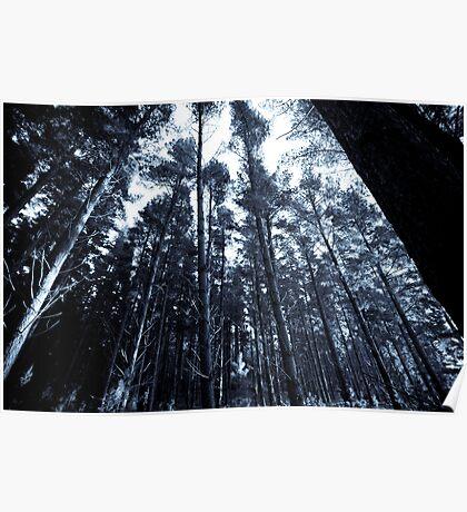 Pine Forest - Fleurieu Peninsula, South Australia Poster