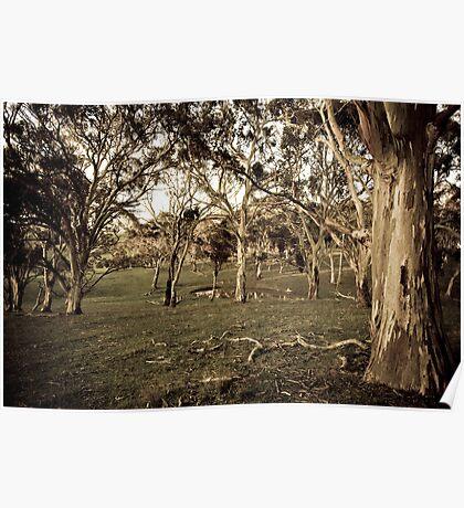 Trees - Fleurieu Peninsula, South Australia Poster