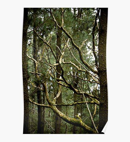 Dead Wood - Fleurieu Peninsula, South Australia Poster
