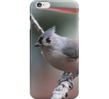 Tufted titmouse on an autumn afternoon iPhone Case/Skin