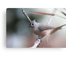 Tufted titmouse on an autumn afternoon Metal Print