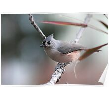 Tufted titmouse on an autumn afternoon Poster