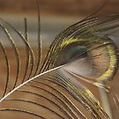 Peacock Feather by PPPhotoArt