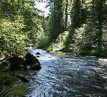 Fish Creek by SKNickel