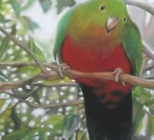 Australian King Parrot by Victorino  Bautista