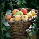 Basket of Apples by Astrid Ewing Photography