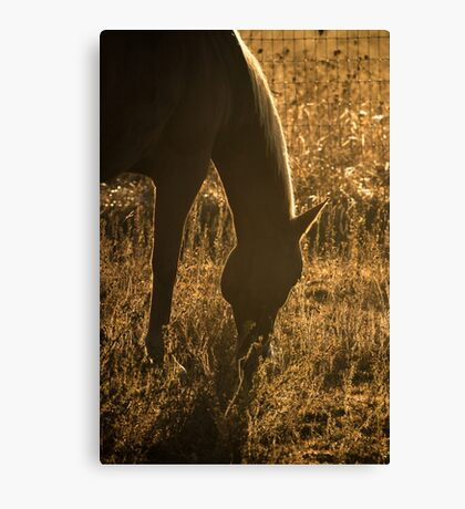 A Meal Under Morning's Light Canvas Print