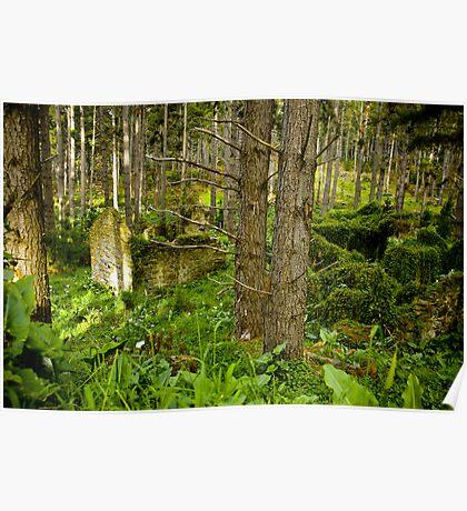 Forest Ruin - Fleurieu Peninsula, South Australia Poster