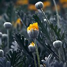 Winter Yellow by gigglemonster