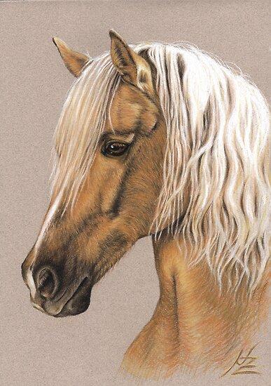 Berber Stallion Portrait by Nicole Zeug
