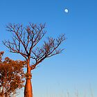 boab and the moon at manning gorge by nicole makarenco