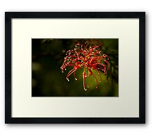 Hello Blossom! Framed Print