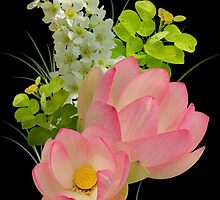 Lotus composition by orko