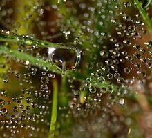 Water Drops by liza1880