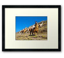 llamas rule the road  Framed Print