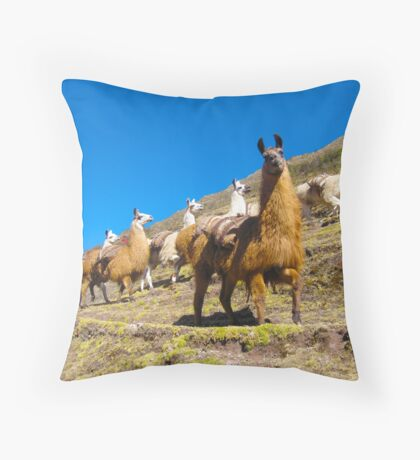 llamas rule the road  Throw Pillow