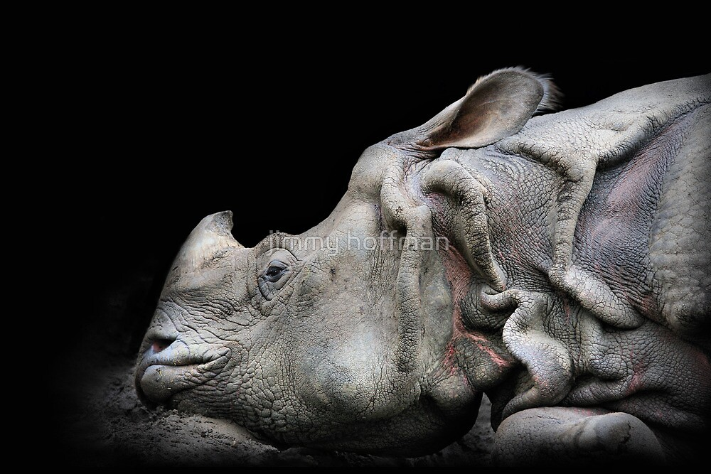 Rhino by jimmy hoffman