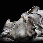 Rhino by jimmy hoffman
