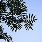 Leafy Shadows by SmallKid92