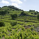 Wine route in Cyprus by idoavr