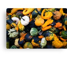 Colorful pumpkins  Canvas Print