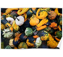 Colorful pumpkins  Poster