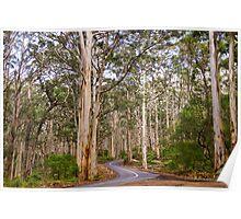 Boranup Karri Forest, Southwest Australia Poster
