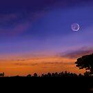 Nightfall by SophiaDeLuna
