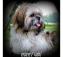 Puppy Luv Photographic Print