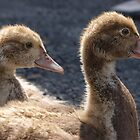 Muscovy Ducklings by monkeyferret