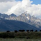 Bison on the Flats by Loree McComb