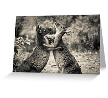 Fighting Kangaroo's, Perth hill's, Western Australia Greeting Card