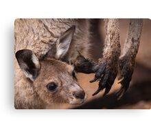 Mother and Joey Kangaroo, Perth hill's, Western Australia Canvas Print