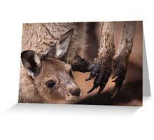 Mother and Joey Kangaroo, Perth hill's, Western Australia Greeting Card