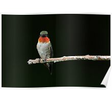 Staring Contest / Rubythroated Hummingbird Poster