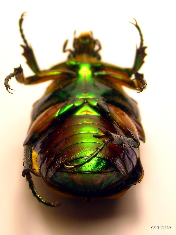 Beetle Underbelly III by Cameron Hampton