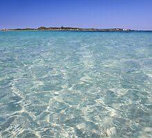 Penguin Island, Western Australia by Marc Russo