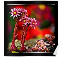 Red Flowers in Bloom Poster