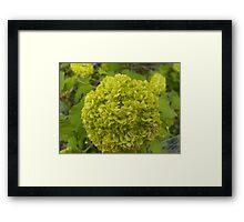 A Green Floral Ball Framed Print